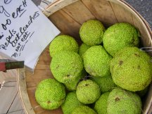Osage oranges at Union Square Farmers Market.