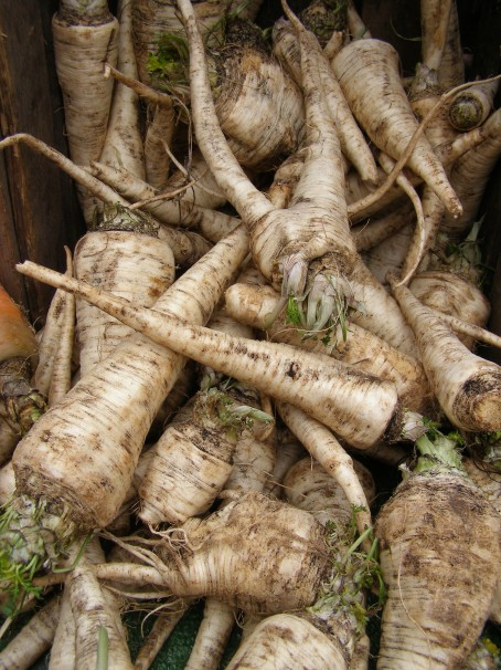 Parsley Root at Union Square Greenmarket