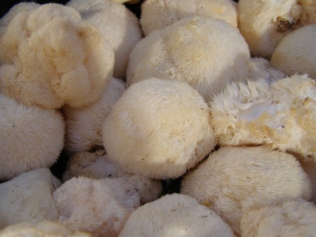 Pom Pom Mushrooms